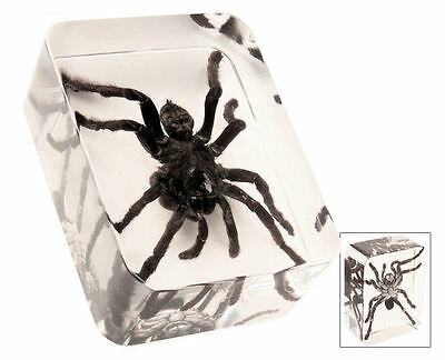 Real Tarantula Spider Specimen In Clear Lucite Paperweight - New