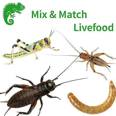 Mix & Match Livefood - Locusts Crickets Mealworms Waxworms - Live Reptile Food