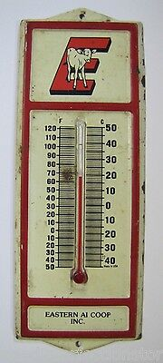 Old EASTERN COOP Advertising Thermometer Cow Calf 'E' made in USA Seed Feed sign