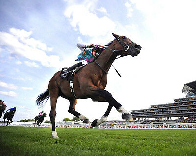 Frankel Ridden By Tom Queally 06 (Horse Racing) Photo Print