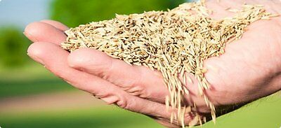 New 20kg Hard wearing tough quality lawn grass seed UK (DEFRA cert) FREE POST !!