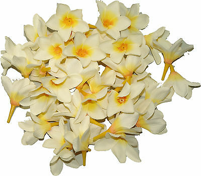 50 xFrangipani Artificial Craft Flower Display Floral Decor Wedding White Yellow