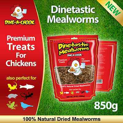 Dried Mealworms Treat for Chickens 850gm / Mealworm / Meal Worms / Poultry