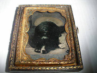 Antique rare  ambrotype dog  Newfoundland