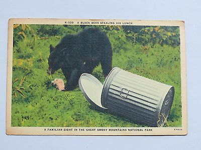 """Vintage """"A Black Bear Stealing His Lunch"""" Postcard"""