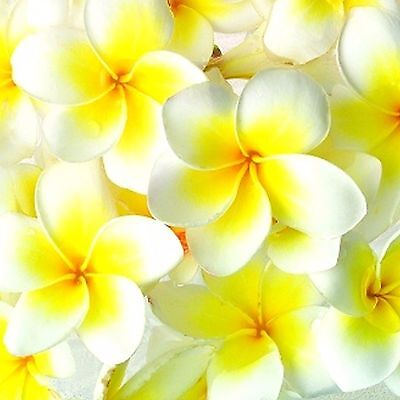 FRANGIPANI Fragrance Oil Candle/Soap Making, Oil Burners, Diffusers