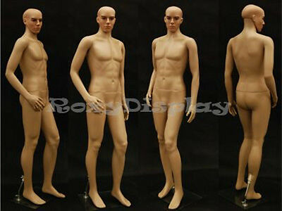 Male Plastic Unbreakable Mannequin Display Dress Form Display Ken + Free Wig