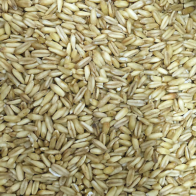 15Kg Whole Naked Oats for Wild Bird Food a good source of high energy and oil