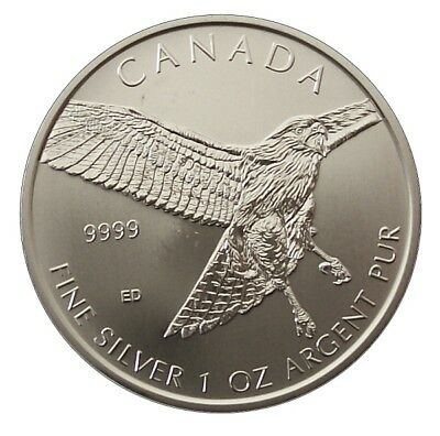 ++ Birds of Prey 2015 - Bussard / Red Tailed Hawk- 1oz Ag / Silber - 5 CAD ++