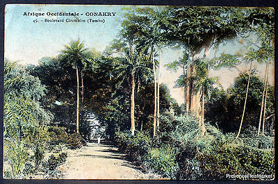 Cpa Postcard Aof Guinee Conakry Boulevard Tombo 36G72