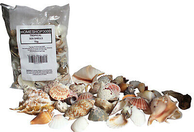 Tropical Sea Shells Clams Snail Scallops Beach Decoration 1kg Bag