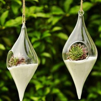 Clear Olive Hanging Glass Flowers Plant Vase Terrarium Container Home Decor