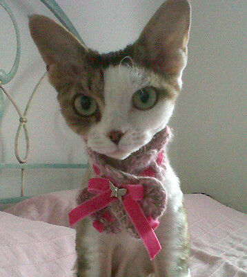 ROSE collare cachemire gatti piccoli cani kitty collar cat dog fashion