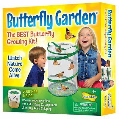 Insect Lore Live Butterfly Garden Growing Kit - Butterfly Life Cycle House Facts