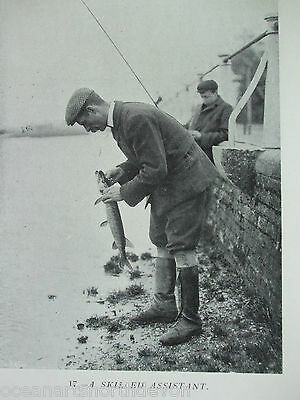 Antique Print C1904 Fishing Vintage A Skilled Assistant River Fishing Picture