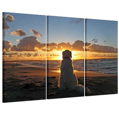 Large Sunset Beach Dog Unframed HD Canvas Print Wall Art Picture Split Poster