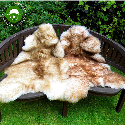 GIANT! RARE SIZE! Genuine Sheepskin Rug, White with Brown Tips, up to 150cm!
