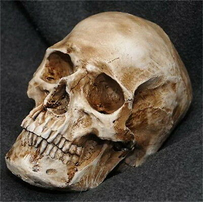 Resin Replica Life Human Skull Model Medical Anatomy Halloween Collectable XD