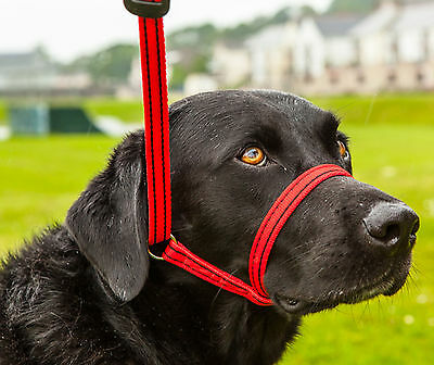 Gencon All in One, Dog Headcollar and Lead in one-RED/BLACK, CLIP TO COLLAR