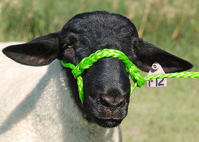 Lime Zest Poly Rope Sheep Halter