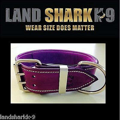 Large Violet Leather Dog Collar with Soft Purple Leather Inner Lining
