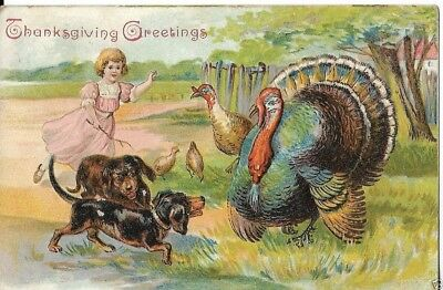 thanksgiving turkey and dogs postcard early 1900s
