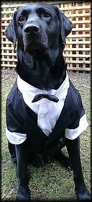 Large Breed Big Dog Tuxedo with Bow Tie Size Formal Suit Male Dog
