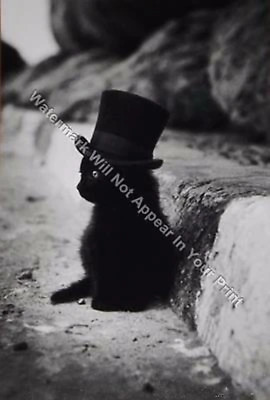 A92 FREAKY BIZARRE STRANGE ODD Black Cat with Top Hat VINTAGE PHOTO WEIRD Pic