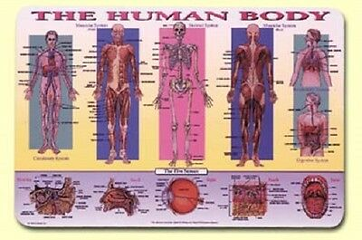 Painless Learning Ruskin Placemats HUMAN BODY Anatomy Laminated Sets