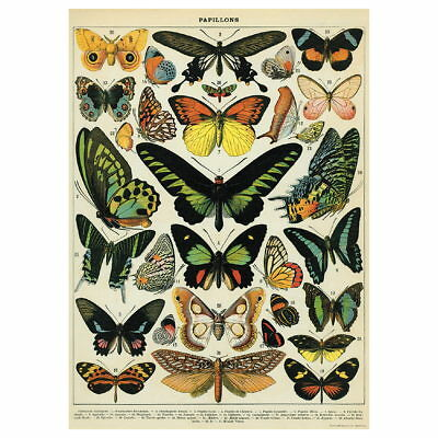 Butterflies French Scientific Chart Vintage Style Poster Ephemera