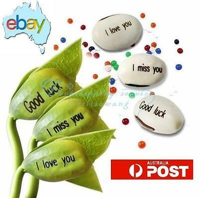 10 X Mixed Magic Message Bean Seeds
