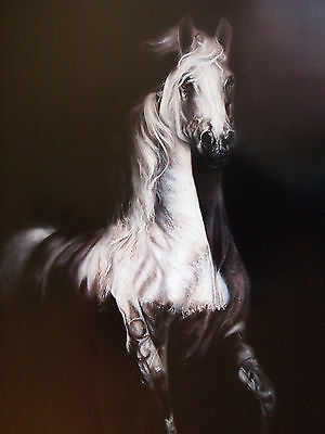 Rare Torres White Arabian Wild Horse Limited Collector Art Print OOP #2 25X36
