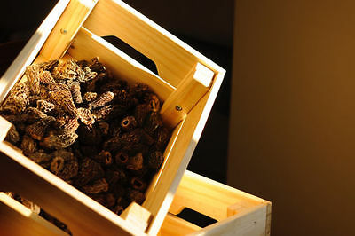 Premium Wild Morels - 2015 Canadian North Crop.