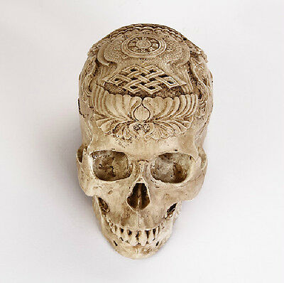 Human Skull Replica Resin Model Medical Realistic NEW 1:1 21cm*14cm*16cm