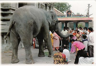 (82130) CLEARANCE Postcard India Elephant Blessing- un-posted