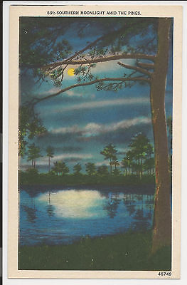Vintage Linen Postcard Night Southern Moonlight Amid Pines Asheville Co. LA23