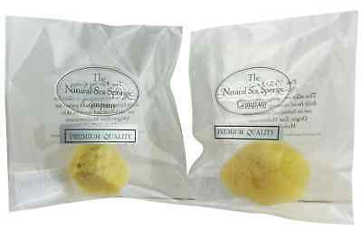 Small Natural Sea Sponge for Baby / Make Up / Cleansing / Exfoliating /Cosmetics