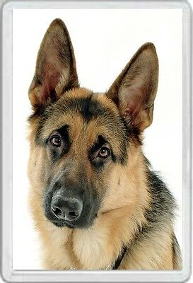 Alsatian - Jumbo Fridge Magnet  Dog Dogs Pup Pups Puppies Canine German Shepherd
