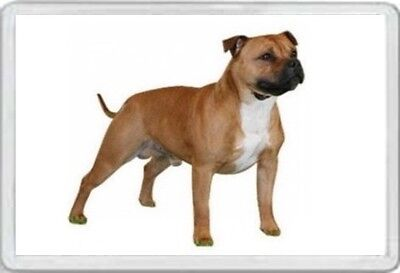 Staffy - Jumbo Fridge Magnet Staffordshire Bull Terrier Dog Dogs Pup Puppies Br
