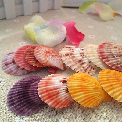20pcs Colorful Natural Shells Crafts Decor DIY For Micro Landscape Making 3-6cm