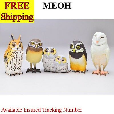 NEW Kaiyodo Q Museum Capsule Owls 5 set cute & real looks F/S from Japan