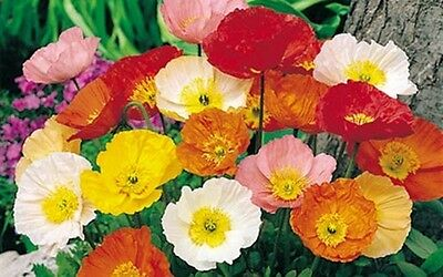 3 Beautiful Packs Of Hardy Annual Seeds
