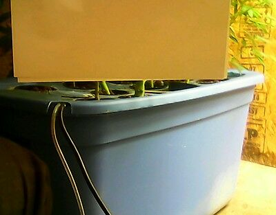 hydroponic system 12 site
