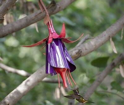 Fuchsia Hummingbird Bird Feeder by Desert Steel