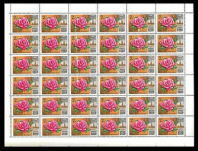 Soviet Union 1978 Rose Moscow morning.2k n° 4723  x 36 Stamps MINT