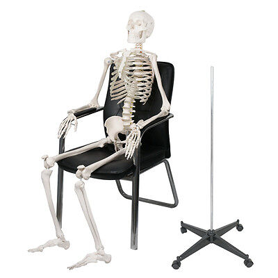 70'' Life-size Skeleton Model Medical School Human Anatomy Class W/Rolling Stand