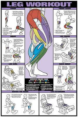 LEGS WORKOUT Weight Training Professional Fitness Gym Instructional Wall POSTER