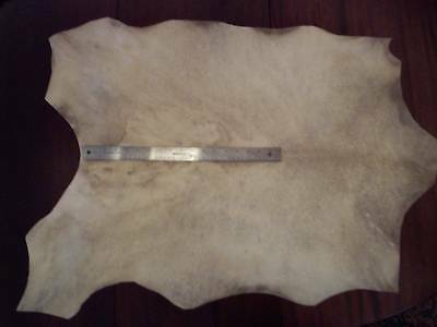 Real Medieval-style Parchment/Vellum whole hide