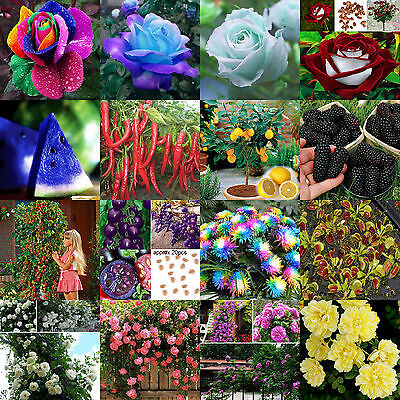 Mix Colorful Rare Indoor Outdoor Flowers Vegetable Fruit Seeds Home Garden Plant