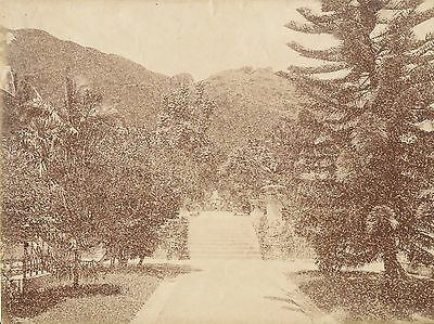 Original Photo The Public Garden Hong Kong China C1880
